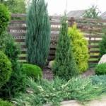 Выбираем какие деревья посадить вдоль ограды