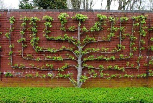 На каком расстоянии соседи имеют право сажать деревья на 30
