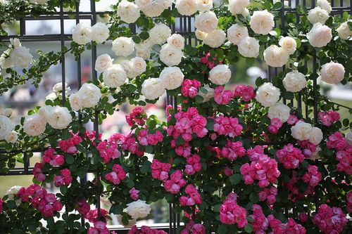 cvety_na_zabore_06