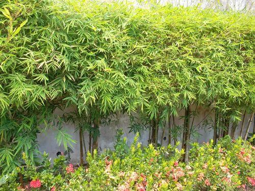 Выбираем растения