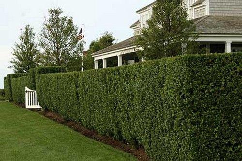 Красивый зеленый забор