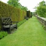 Живой забор на даче: фото идеи